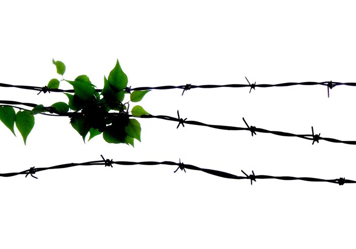 Plant growing along barbed wire