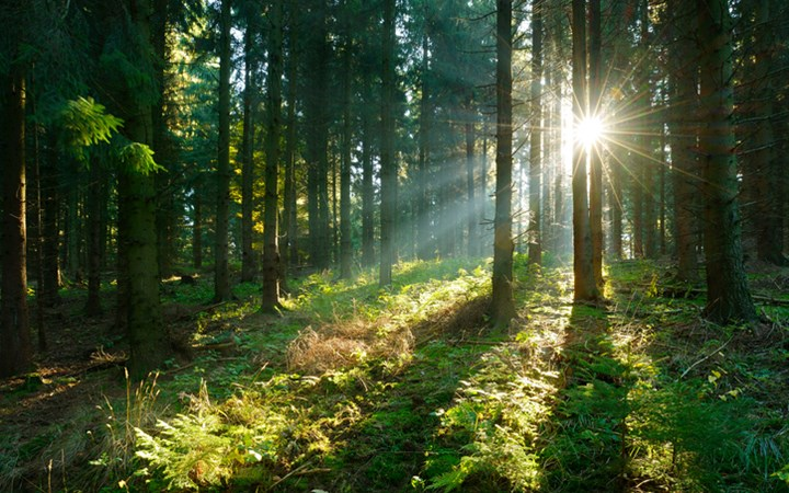 Sun shining through thick forrest