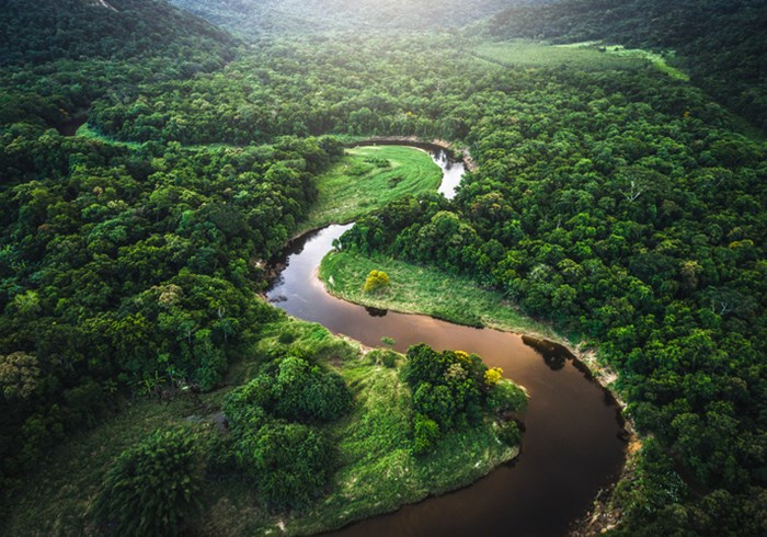 Aerial view of muddy river winding through lush green rainforest