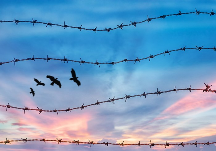Barbed wire with birds flying in the background